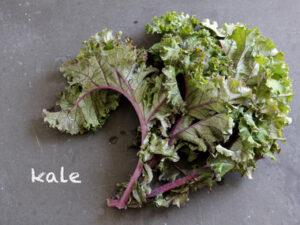 Kale (sold 1 per pot)