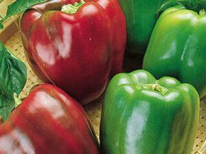 Peppers (sold 1 per pot)