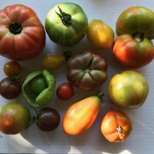 2021 Seedling/Plant Sale