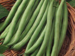 Bush Beans/ Wax Beans (sold 4-cell packs)