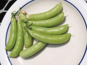 Spring Vegetables (sold in 4-pack)